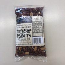 Extra Fancy Large Ontario Grown Valencia Peanuts
